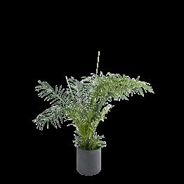 Areca artificiel H 180 cm avec pot