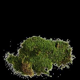 Mousse végétale (500 gr)